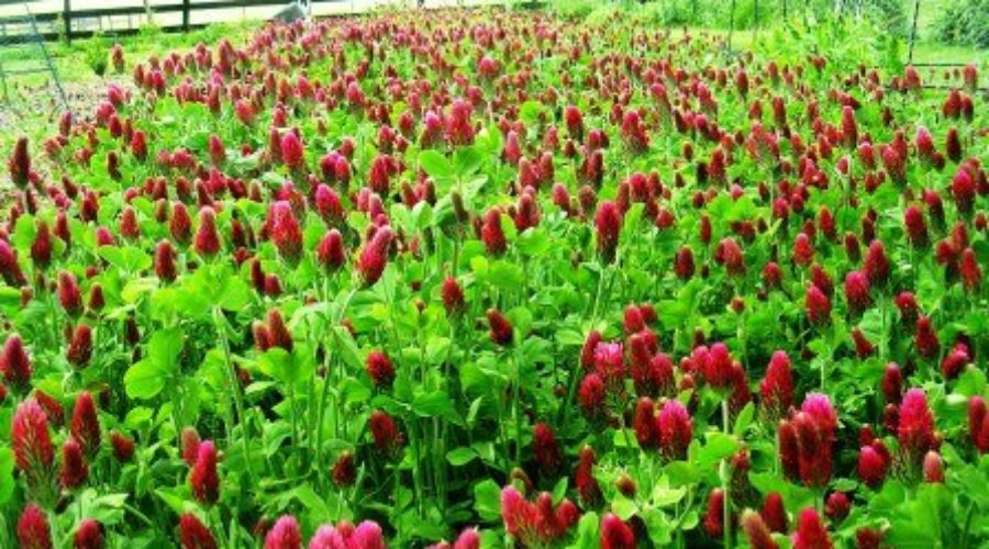 Cover Crops a Must
