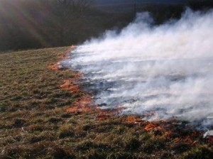 Here's a picture of what a prescribed burn* of native prairie should look like
