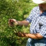 Swoope Almanac: October 2013: Quail Release on the Farm