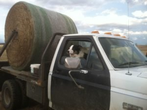 The four-wheel drive, hydrated feeding machine with our herd dog Dexter.