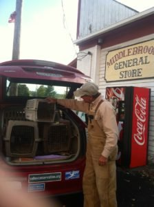 Author delivering Quail from Cobble Hill Farm to the Middlebrook Store.