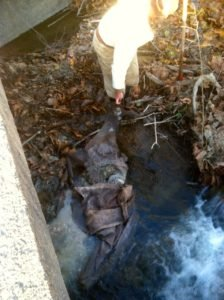 Author pulls deer carcass out of Middle River.