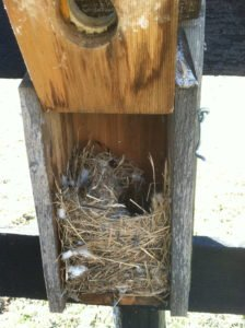 This is a typical English Sparrow nest. Notice the dome shape on top and the diversity of material.