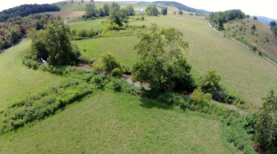 Planting and Growing a Successful Riparian Forest Buffer