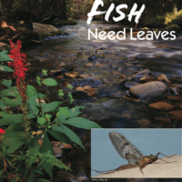 Leaves from Native Trees – The Foundation of Freshwater Ecosystems (JMU Students)