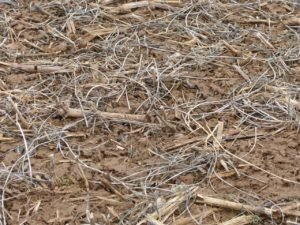 Soybean residue (what's left after the bean is harvested) has a low carbon to nitrogen ratio and breaks down quickly leaving soil exposed to the impact of raindrops.