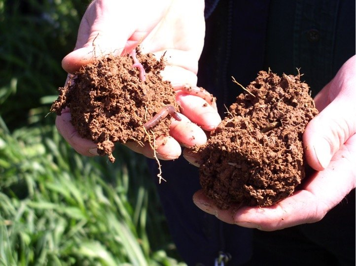 Healthy soil has soil organic matter above three percent.