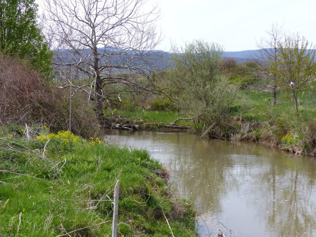 Remove cattle from streams and the banks will heal.
