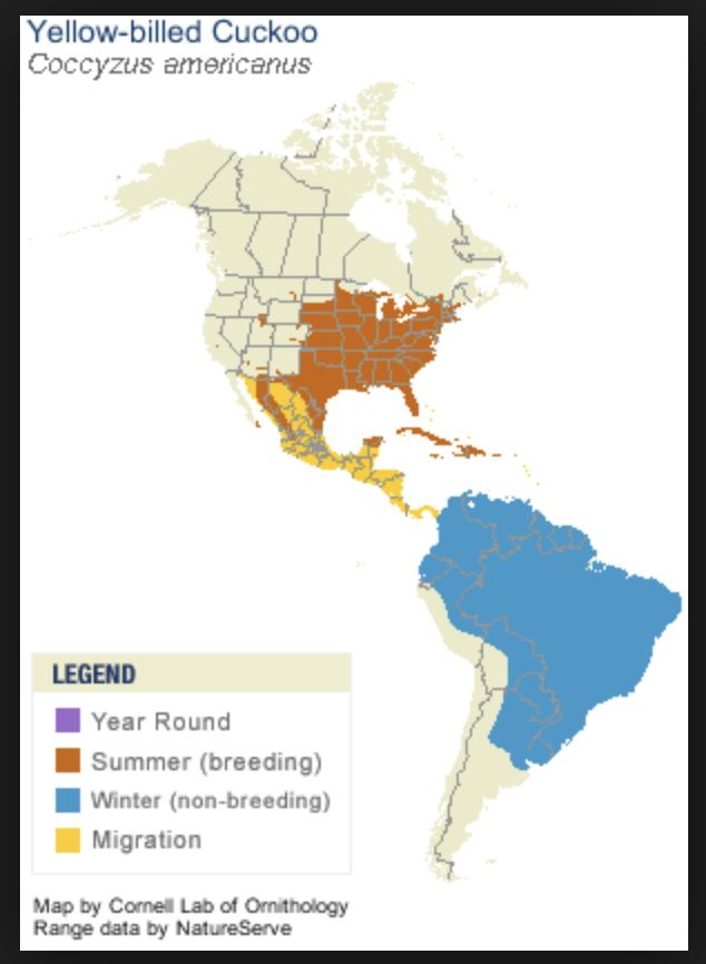 Image result for yellow-billed cuckoo range map