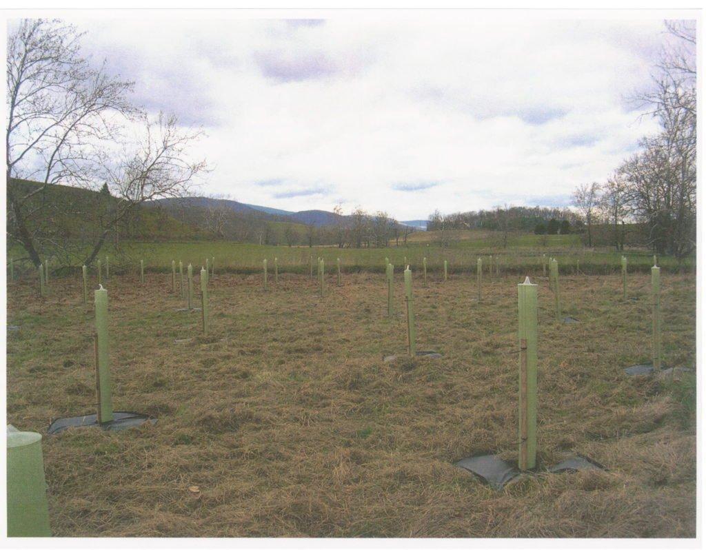 CREP tree planting.