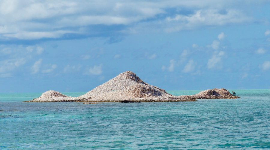 Anegada: Beautiful Beaches, Queen Conchs, Iguanas and…Cats