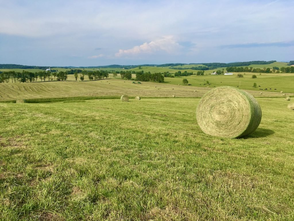 Hay in Swoope
