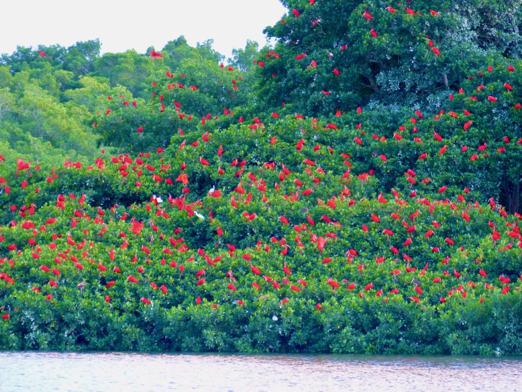 Scarlet Ibis Island