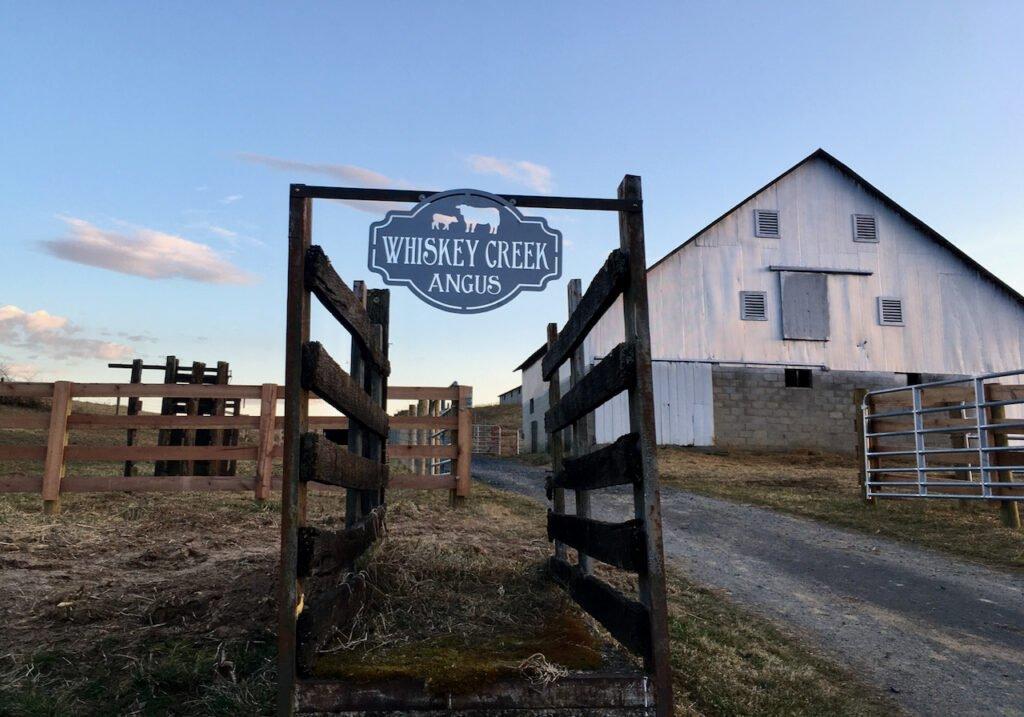 Whiskey Creek Angus is in Churchville, Virginia