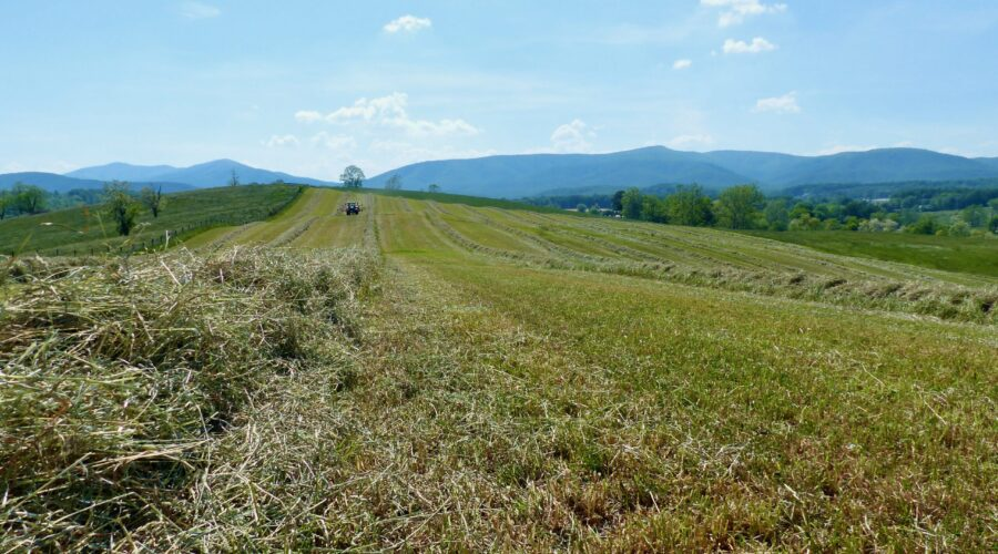 The hay is ready at Whiskey Creek Angus.