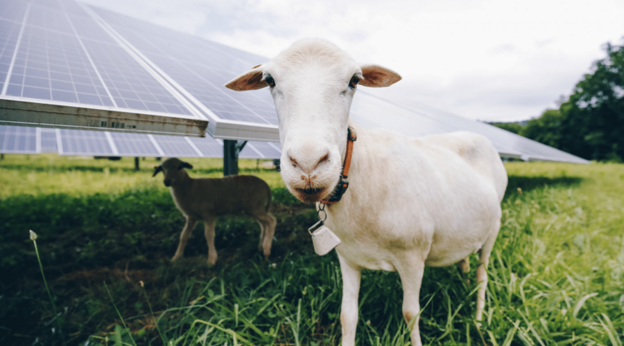 Solar power and pasture